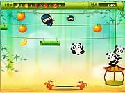 La panda salta